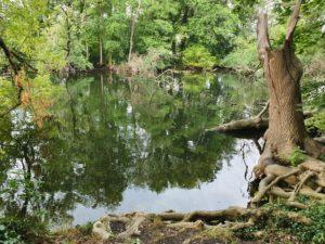 Durch den Königswald in Potsdam @ Potsdam Bushaltestelle Krampnitzsee