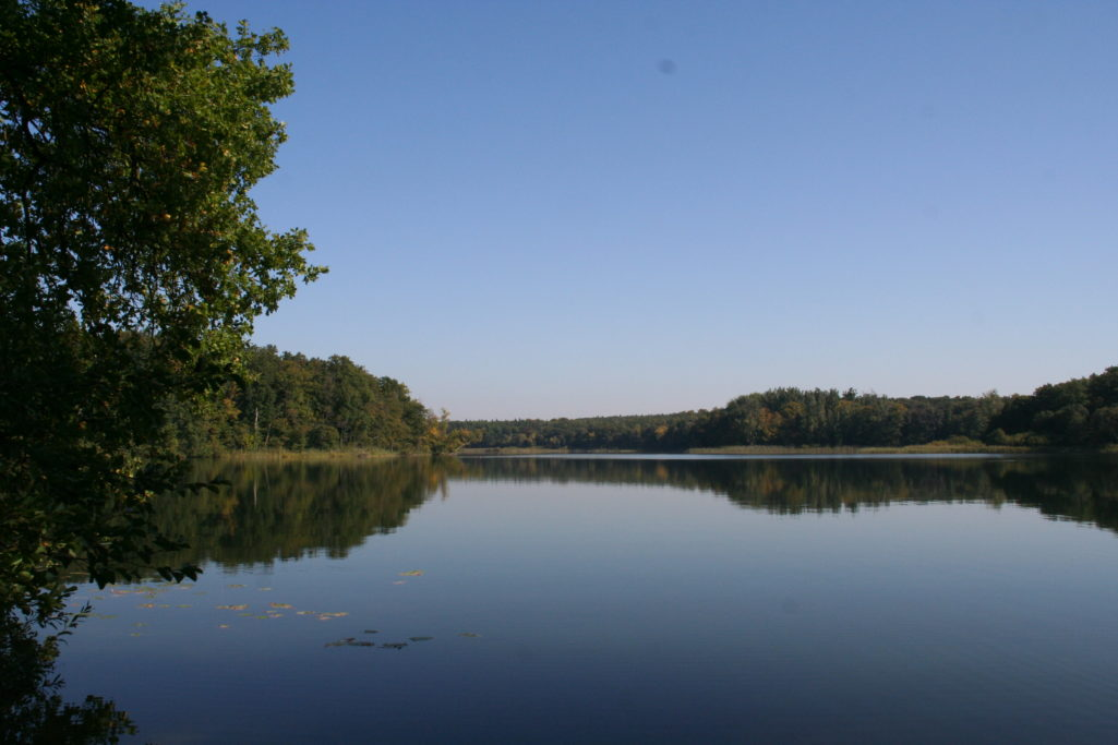 Sacrower See im Königswald in Potsdam