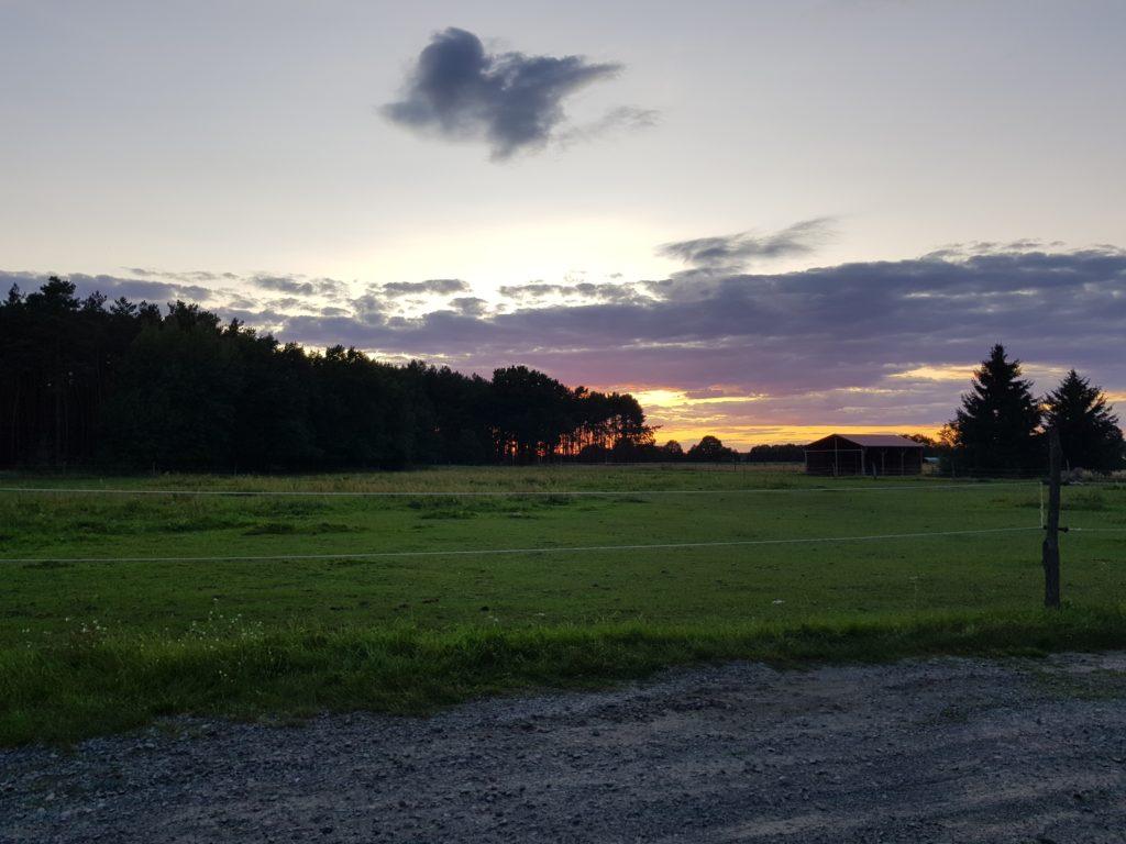 Sonnenuntergang mit seltenem Getier im Hintergrund