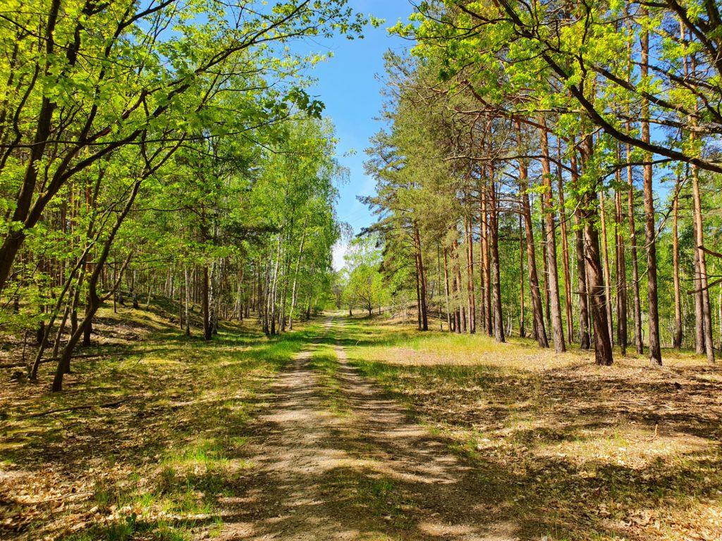 Wald zwischen Luckenwalde und Kloster Zinna